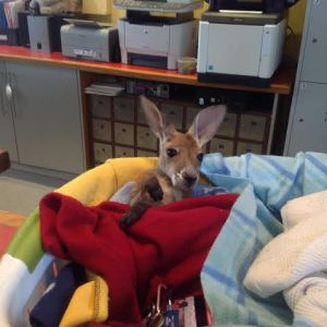 Archie orphaned Joey
