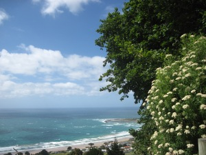 View from headland